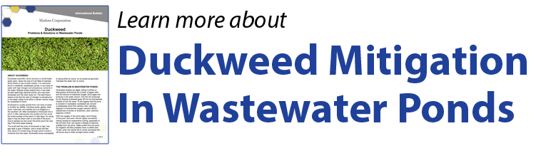 Button linking to an Informational Bulletin about Duckweed Mitigation in wastewater pond