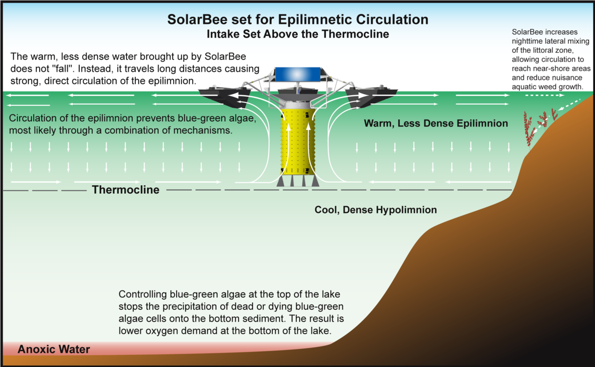diagram showing how SolarBee Lake Circulators control cyanobacteria (blue-green algae) via epilimnetic circulation.